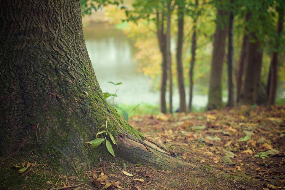 tree-trunk-569275_960_720-2