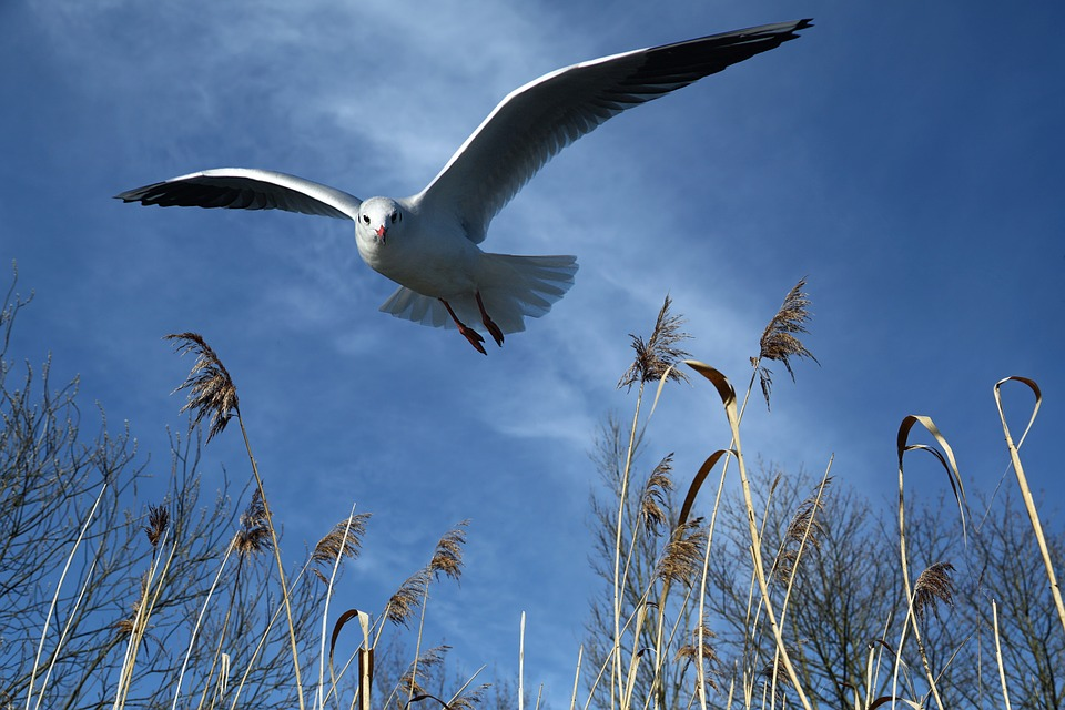 seagull-700074_960_720.jpg